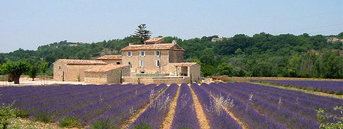 Campo de lavanda Aix en Provence